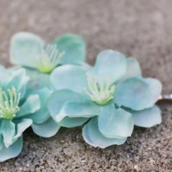 cherry blossom hair clip 'Neptune flower'